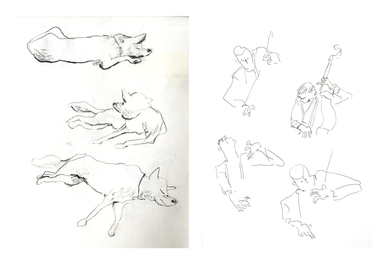 dogbass